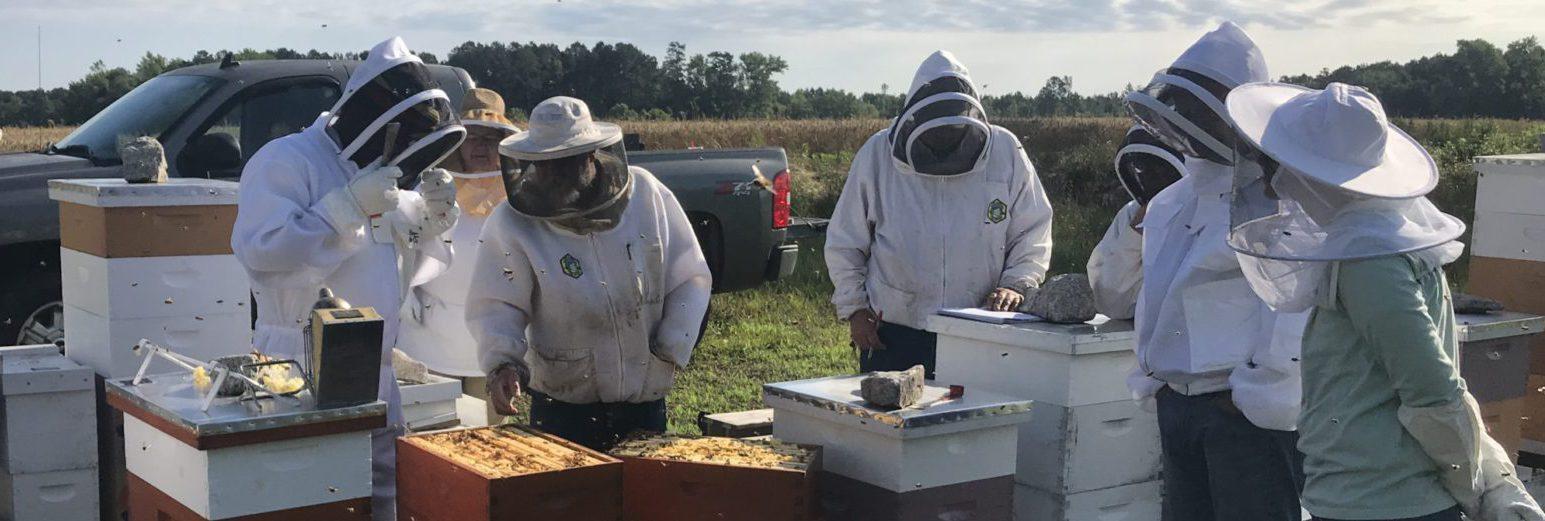 Club apiary